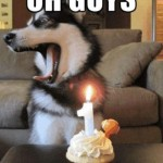 1st year birthday dog