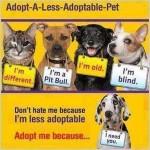 adopt a less desirable pet