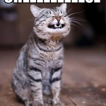 cat cheese