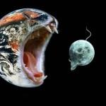 cat eats moon