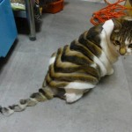 cat funny haircut