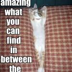 cat in cushion