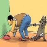 cat spay back