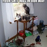 cats make mess