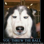 dog fakes throw