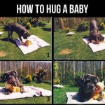 dog hugs baby