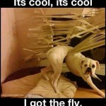 dog messes up blinds
