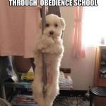 dog stripper