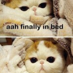 finally in bed, I have to pee