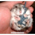 hamster with gun