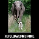 he followed me home