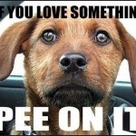 if you love something pee on it
