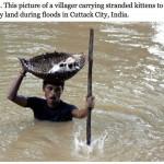 man saves kittens