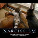 narcissim cat