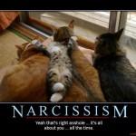 narcissim cat