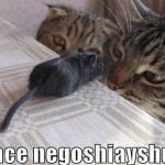 peace negotiations
