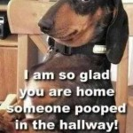 poop in hallway