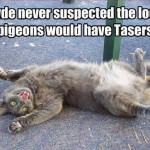 tasers from pigeons