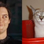toby magquire cat face