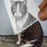 trippy cat eyes