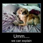 umm we can explain