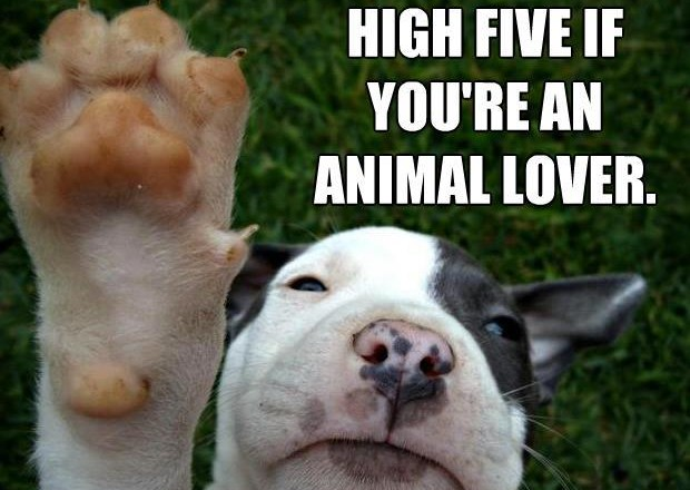 hi 5 animal lover